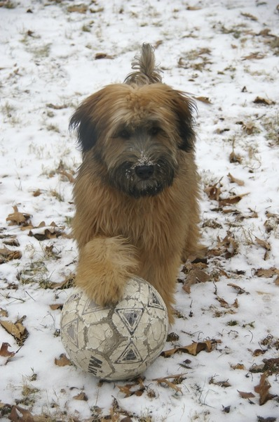 Want to play ball with me?