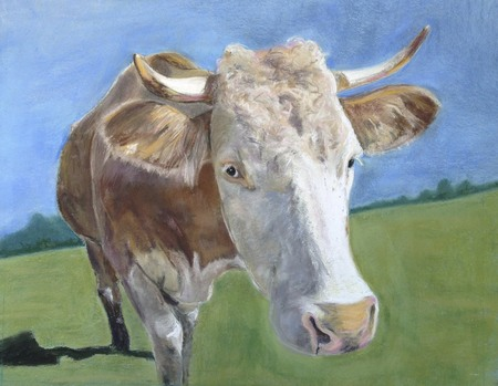 Fiona, my darling Swiss cow 