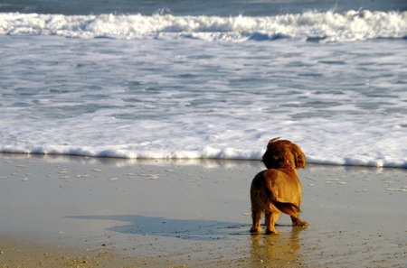 One small dog, one BIG ocean.